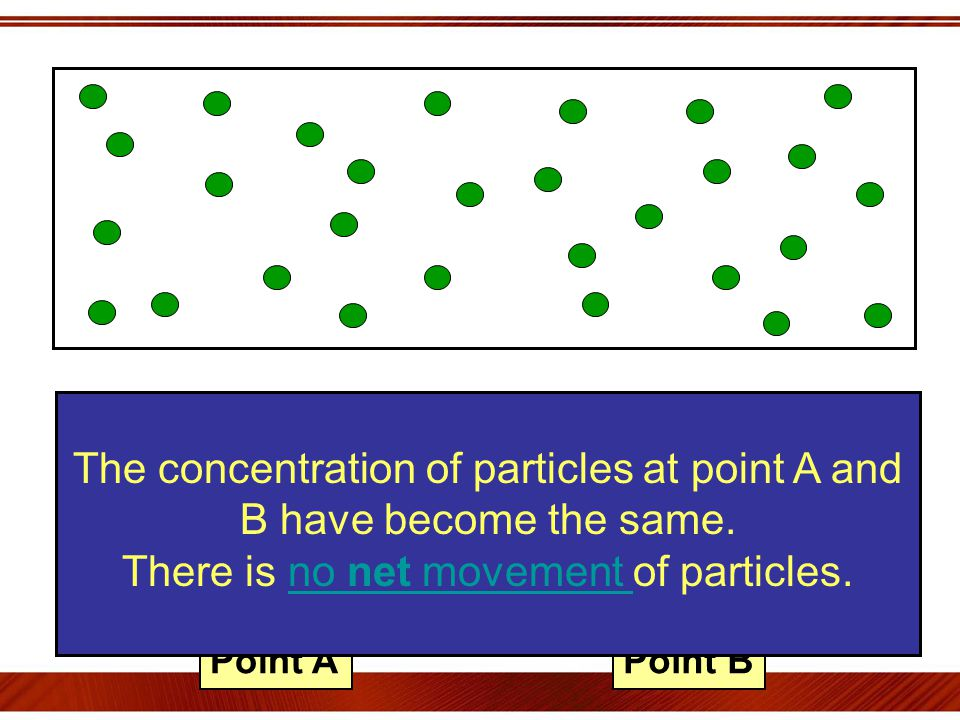 Point APoint B The concentration of particles at point A and B have become the same.