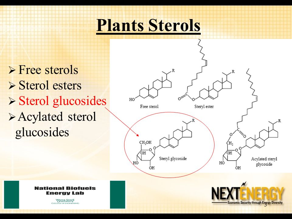 3 Plants Sterols  Free sterols  Sterol esters  Sterol glucosides  Acylated sterol glucosides