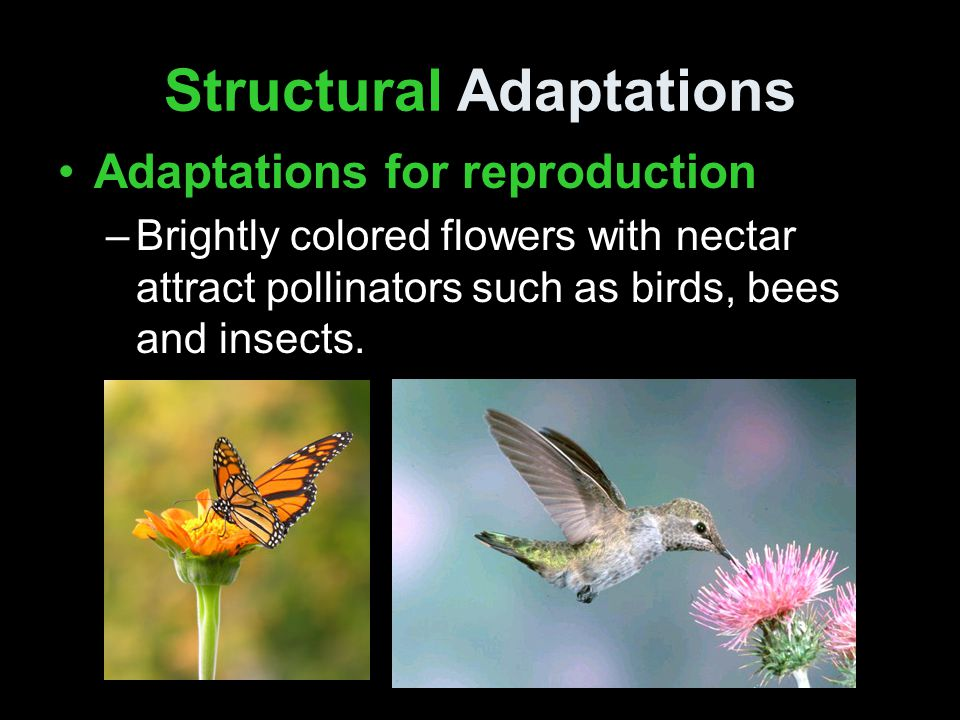 Structural Adaptations Adaptations for reproduction –Sweet fruit attracts animals that spread seeds far away.