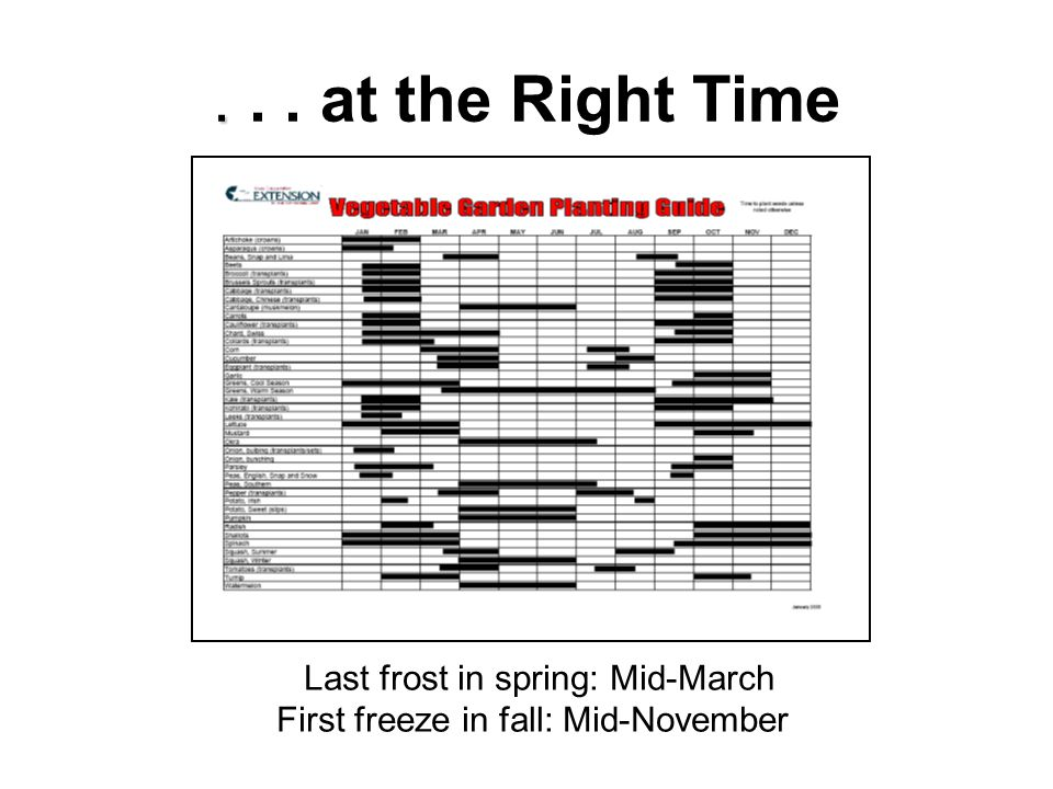 .... at the Right Time Last frost in spring: Mid-March First freeze in fall: Mid-November