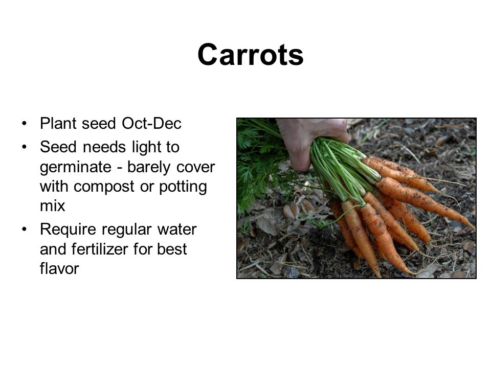 Carrots Plant seed Oct-Dec Seed needs light to germinate - barely cover with compost or potting mix Require regular water and fertilizer for best flav
