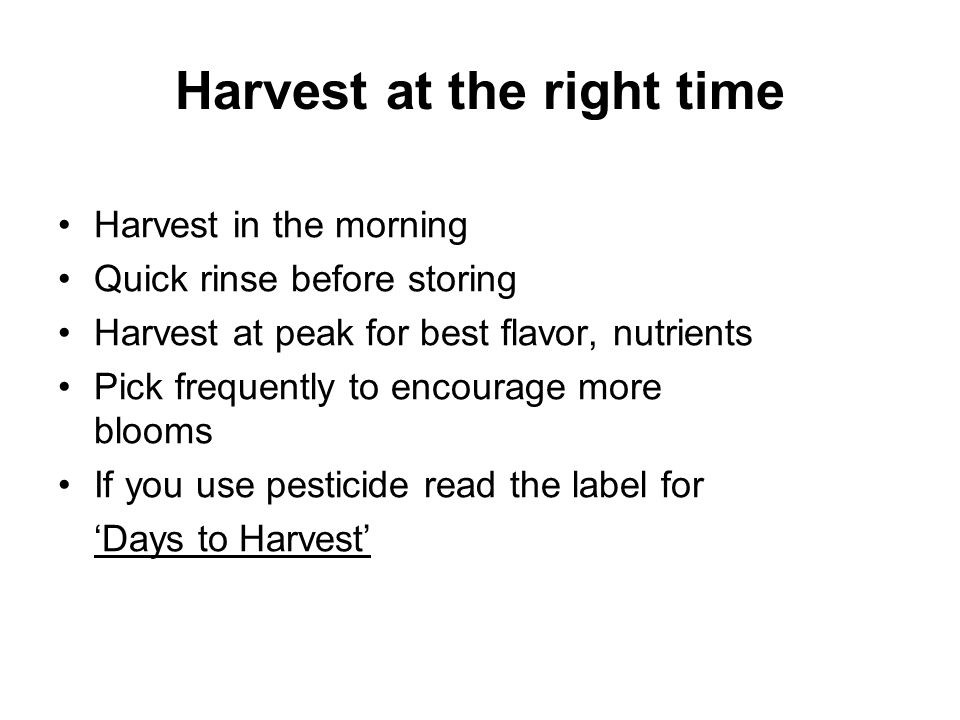 Harvest at the right time Harvest in the morning Quick rinse before storing Harvest at peak for best flavor, nutrients Pick frequently to encourage mo