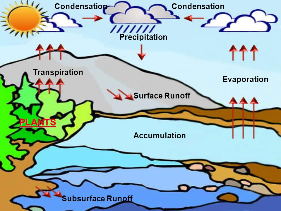 Subsurface Runoff Condensation Transpiration Surface Runoff Accumulation Evaporation Condensation Precipitation PLANTS