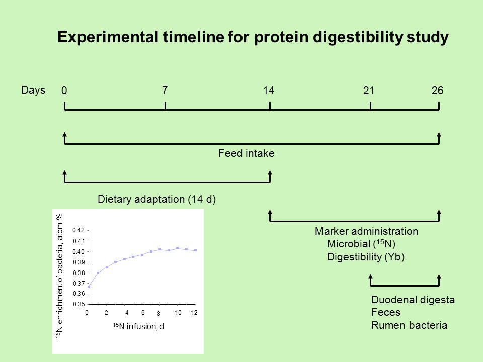 Days 0262114 7 Feed intake Dietary adaptation (14 d) Marker administration Microbial ( 15 N) Digestibility (Yb) Duodenal digesta Feces Rumen bacteria Experimental timeline for protein digestibility study 0.35 0.36 0.37 0.38 0.39 0.40 0.41 0.42 15 N enrichment of bacteria, atom % 0246 8 1012 15 N infusion, d