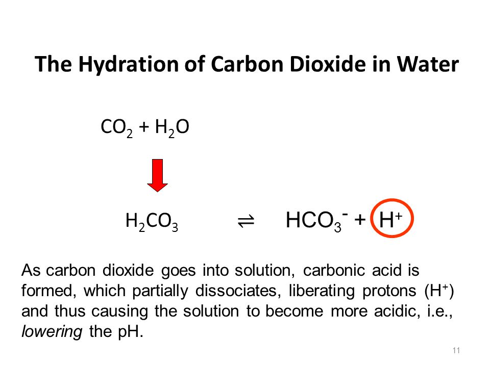 The Hydration of Carbon Dioxide in Water CO 2 + H 2 O H 2 CO 3 11 ⇌ HCO 3 - + H + As carbon dioxide goes into solution, carbonic acid is formed, which