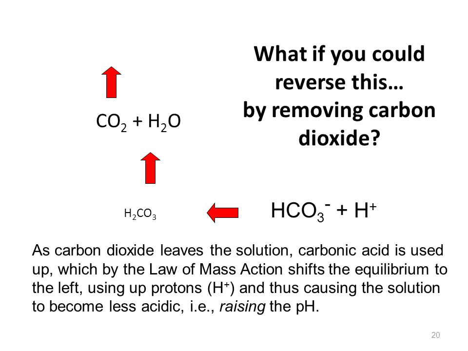 What if you could reverse this… by removing carbon dioxide? CO 2 + H 2 O H 2 CO 3 20 HCO 3 - + H + As carbon dioxide leaves the solution, carbonic aci