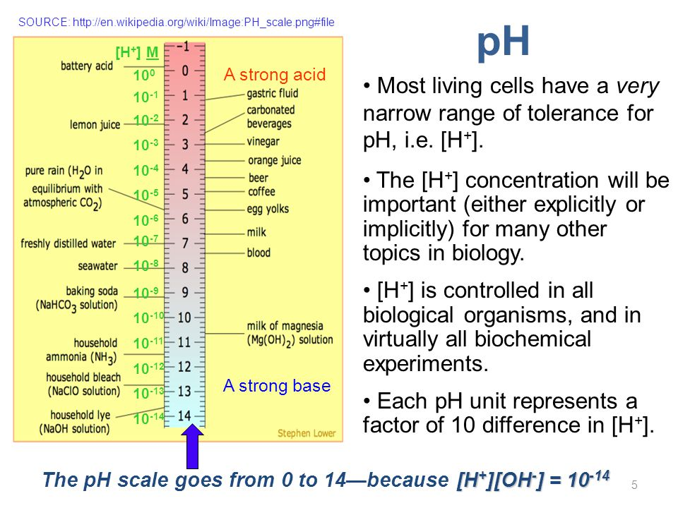 5 Most living cells have a very narrow range of tolerance for pH, i.e. [H + ]. The [H + ] concentration will be important (either explicitly or implic