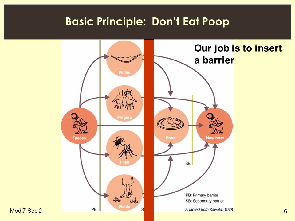 6 Basic Principle: Don't Eat Poop Mod 7 Ses 2 Our job is to insert a barrier