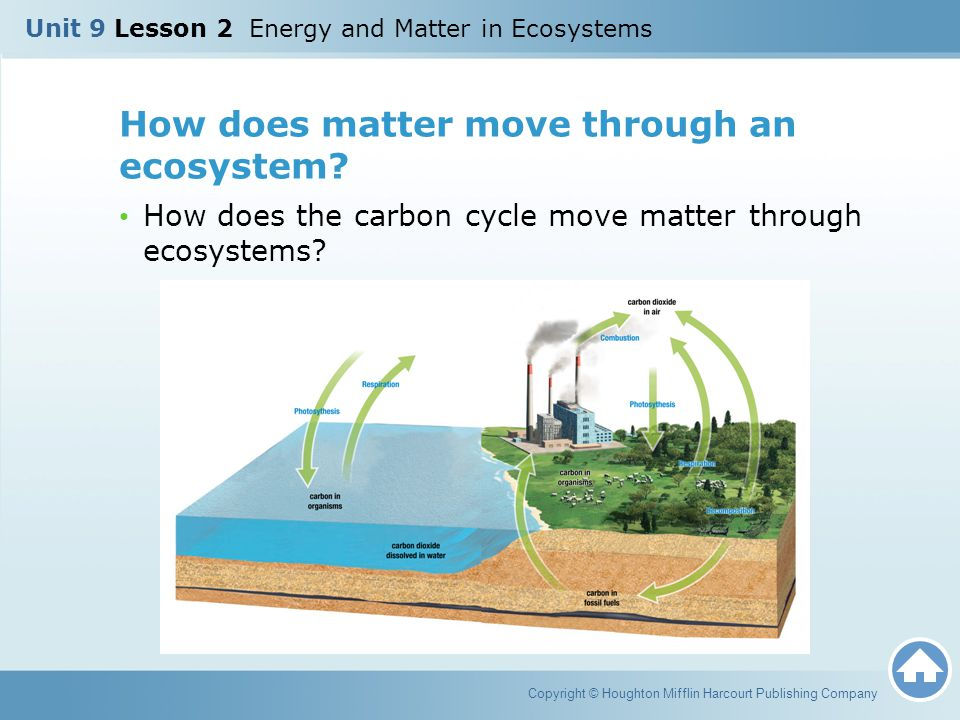 How does matter move through an ecosystem? How does the carbon cycle move matter through ecosystems? Copyright © Houghton Mifflin Harcourt Publishing