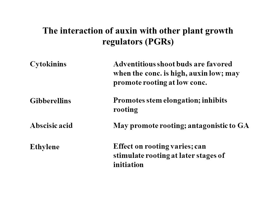 The interaction of auxin with other plant growth regulators (PGRs) Cytokinins Gibberellins Abscisic acid Ethylene Adventitious shoot buds are favored when the conc.