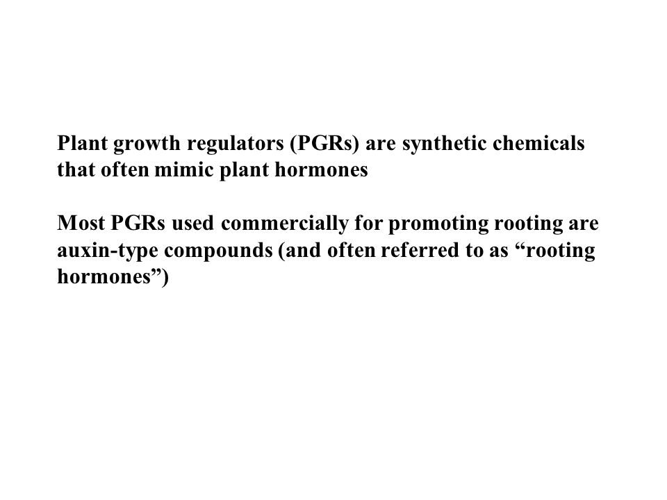 How natural auxins promote rooting of stem cuttings Natural auxins are produced in shoot tips and young leaves Auxin transport is polar (downward from the shoot tip) Auxin will accumulate near the cut stem