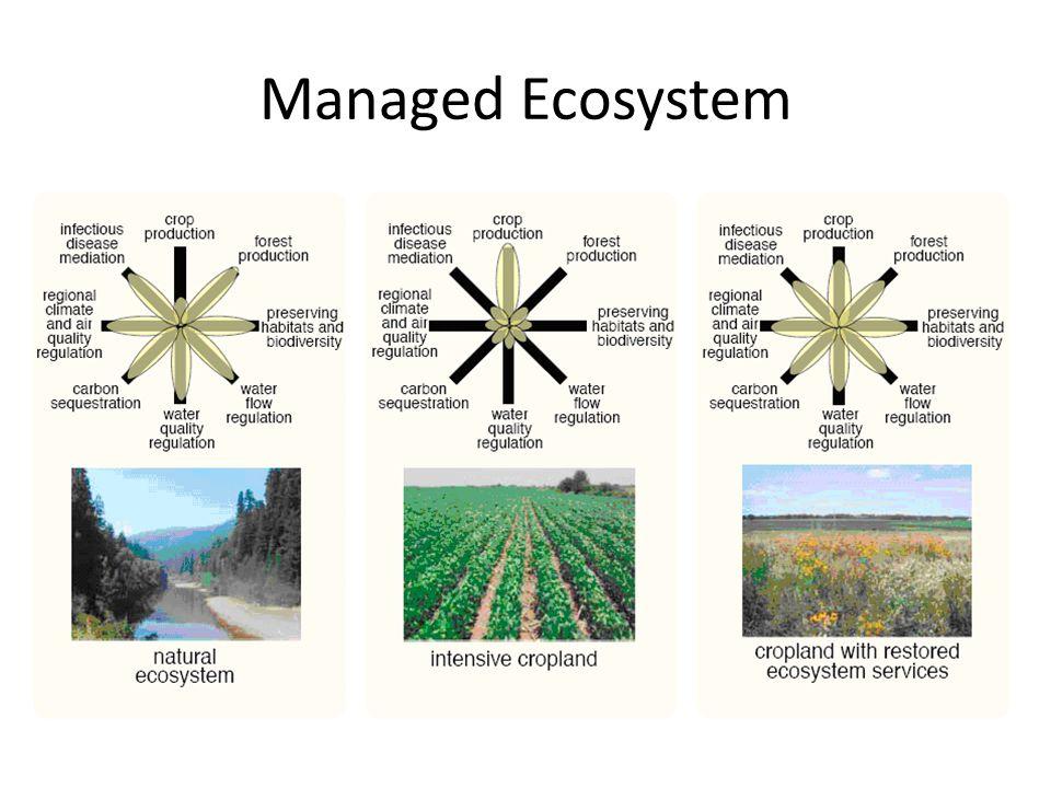 Managed Ecosystem