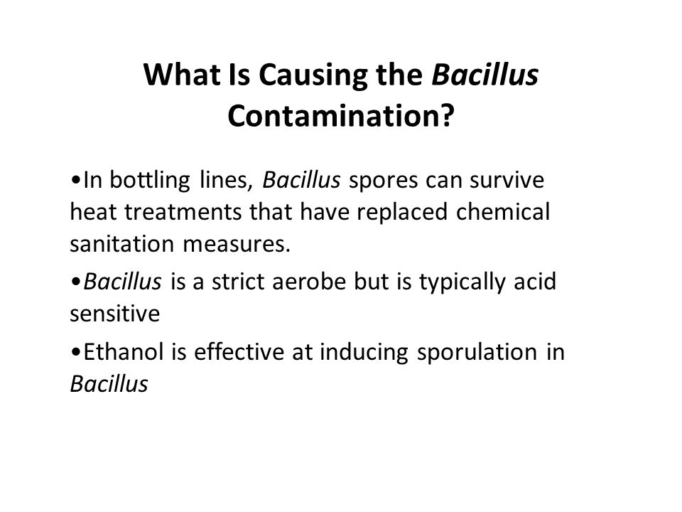 What Is Causing the Bacillus Contamination? In bottling lines, Bacillus spores can survive heat treatments that have replaced chemical sanitation meas