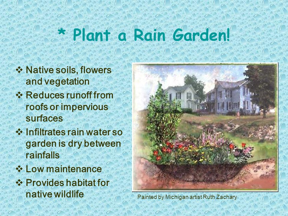  Native soils, flowers and vegetation  Reduces runoff from roofs or impervious surfaces  Infiltrates rain water so garden is dry between rainfalls  Low maintenance  Provides habitat for native wildlife * Plant a Rain Garden.
