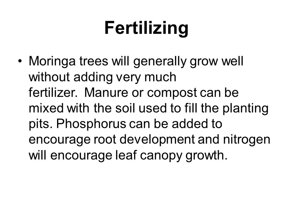 Fertilizing Moringa trees will generally grow well without adding very much fertilizer.