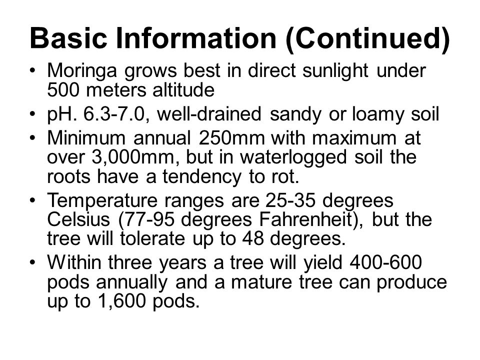 Basic Information (Continued) Moringa grows best in direct sunlight under 500 meters altitude pH.