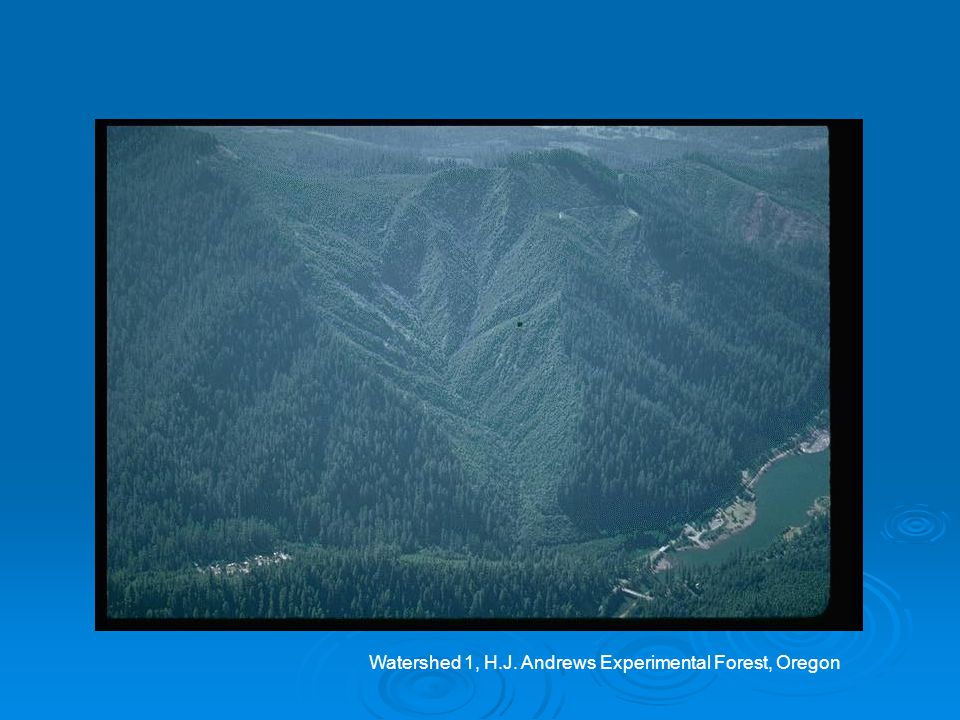 Watershed 1, H.J. Andrews Experimental Forest, Oregon
