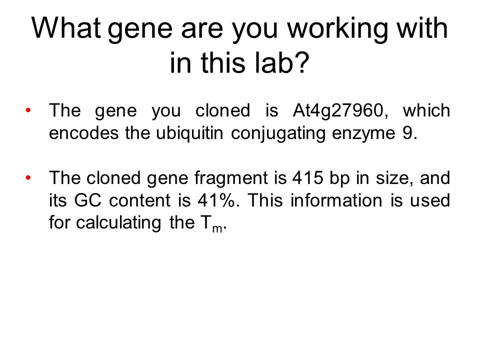 What gene are you working with in this lab.