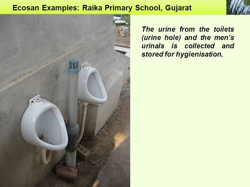 Ecosan Examples: Raika Primary School, Gujarat The urine from the toilets (urine hole) and the men's urinals is collected and stored for hygienisation.