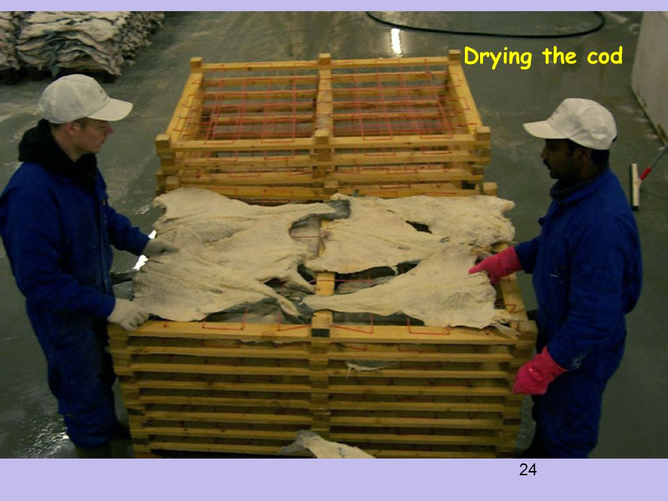 24 Drying the cod