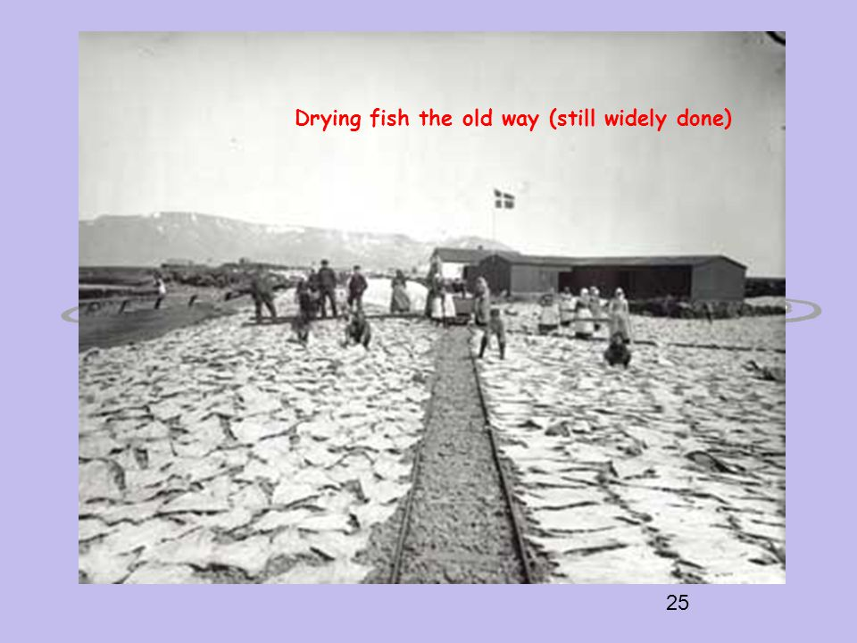 25 Drying fish the old way (still widely done)