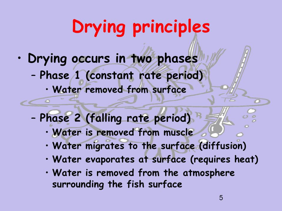 Drying principles Drying occurs in two phases –Phase 1 (constant rate period) Water removed from surface –Phase 2 (falling rate period) Water is removed from muscle Water migrates to the surface (diffusion) Water evaporates at surface (requires heat) Water is removed from the atmosphere surrounding the fish surface 5