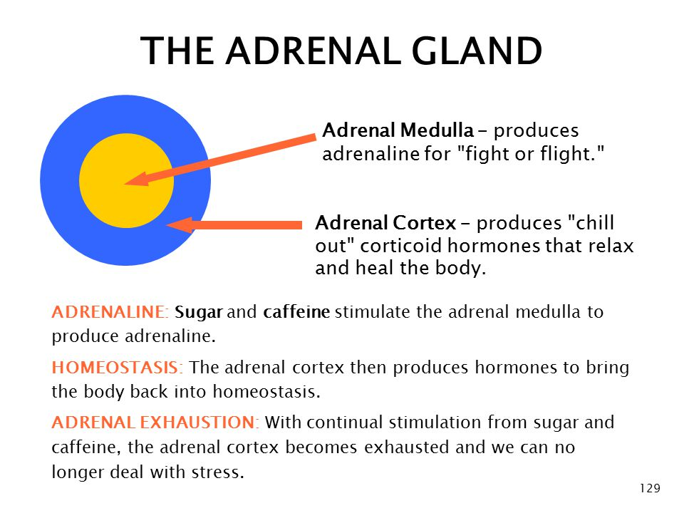 THE ADRENAL GLAND Adrenal Medulla – produces adrenaline for fight or flight.