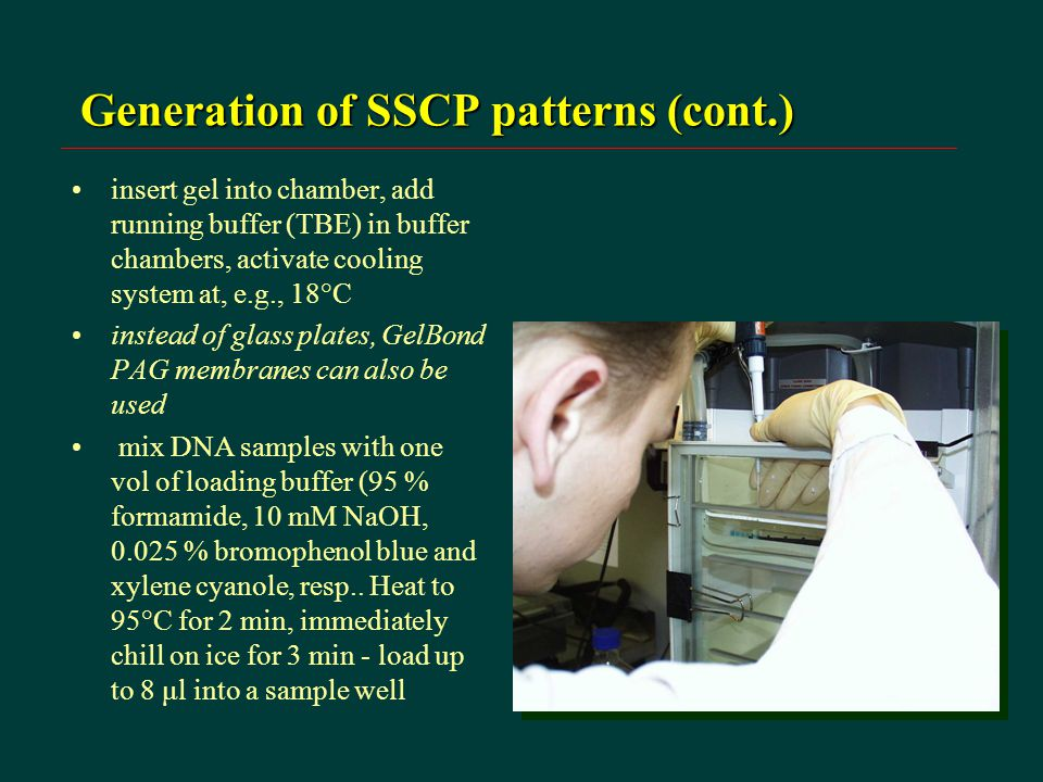 Generation of SSCP patterns (cont.) insert gel into chamber, add running buffer (TBE) in buffer chambers, activate cooling system at, e.g., 18°C instead of glass plates, GelBond PAG membranes can also be used mix DNA samples with one vol of loading buffer (95 % formamide, 10 mM NaOH, 0.025 % bromophenol blue and xylene cyanole, resp..