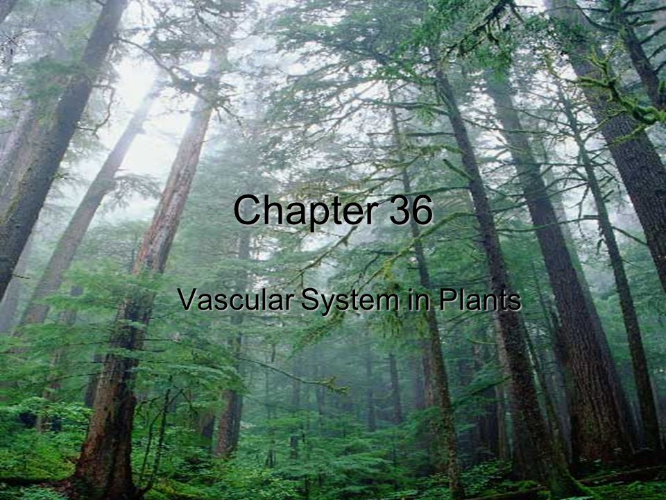 Chapter 36 Vascular System in Plants
