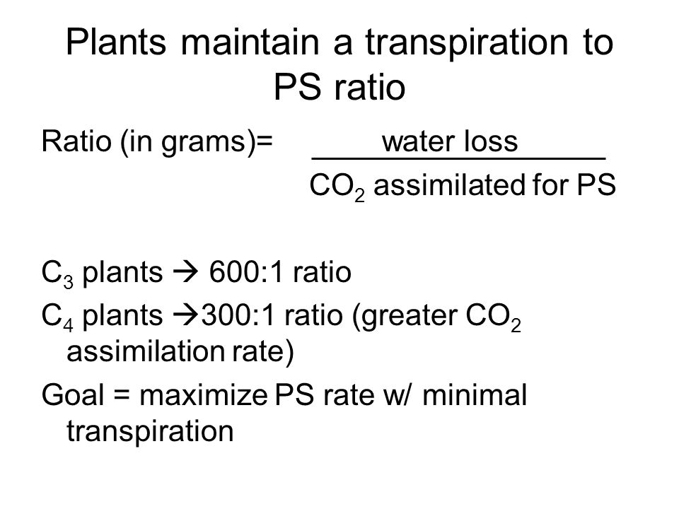 Plants maintain a transpiration to PS ratio Ratio (in grams)= water loss CO 2 assimilated for PS C 3 plants  600:1 ratio C 4 plants  300:1 ratio (greater CO 2 assimilation rate) Goal = maximize PS rate w/ minimal transpiration