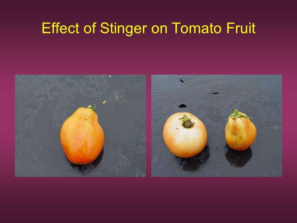 Effect of Stinger on Tomato Fruit