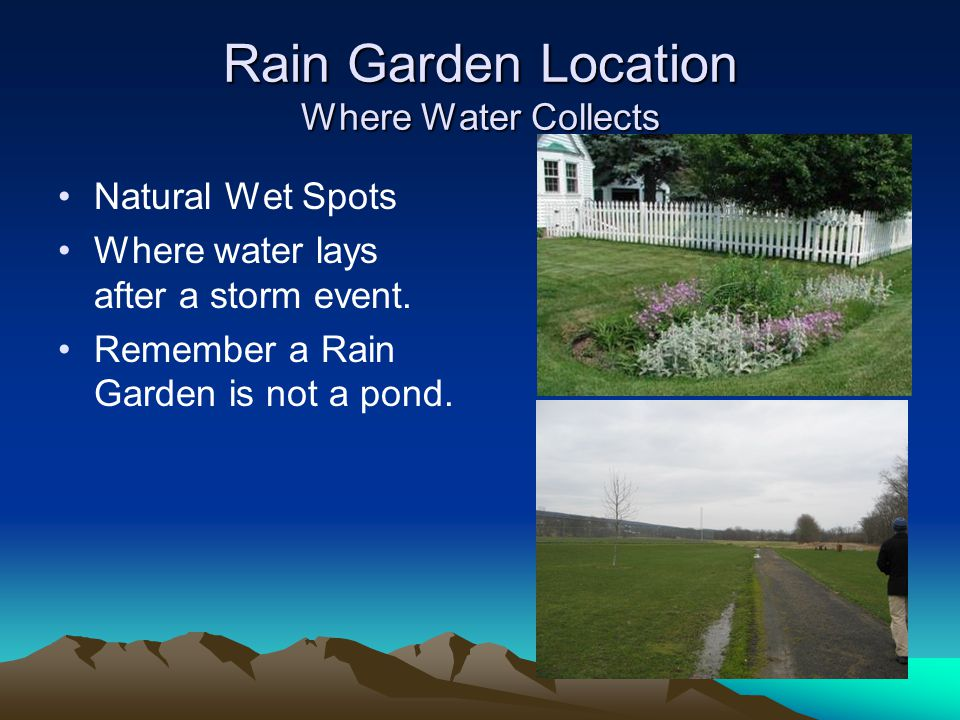 Rain Garden Location Where Water Collects Natural Wet Spots Where water lays after a storm event.