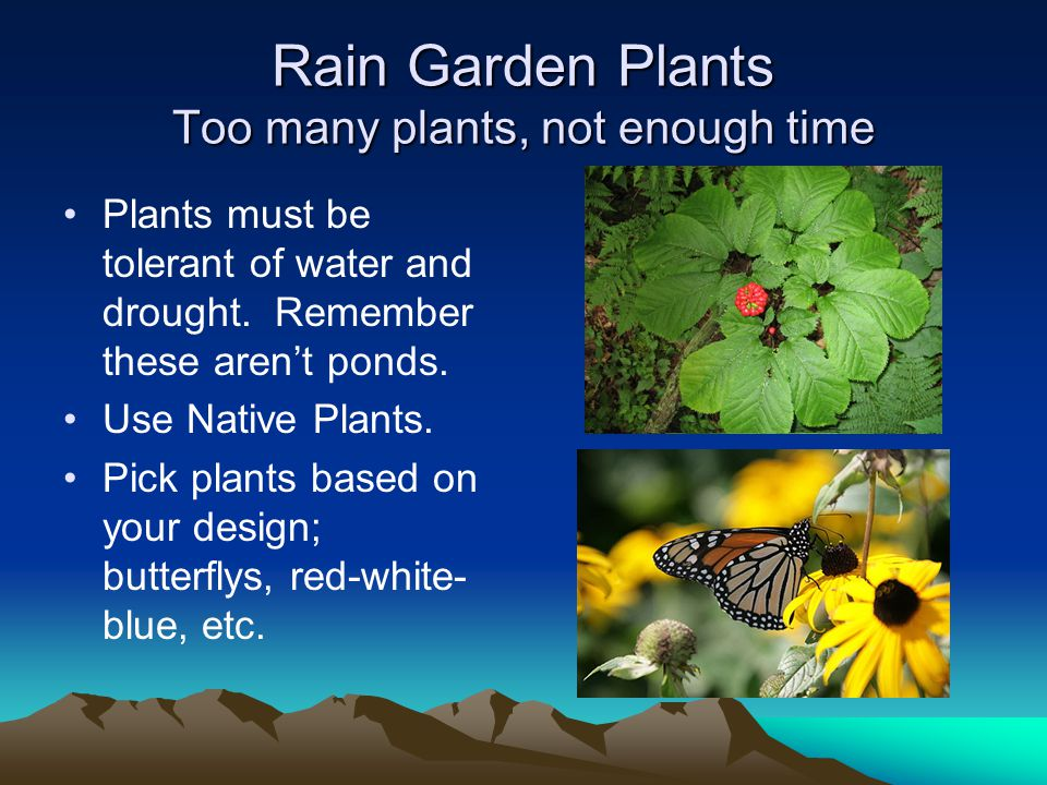 Rain Garden Plants Too many plants, not enough time Plants must be tolerant of water and drought.