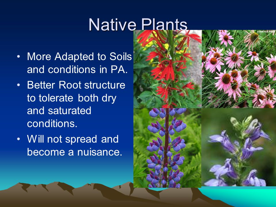 Native Plants More Adapted to Soils and conditions in PA.