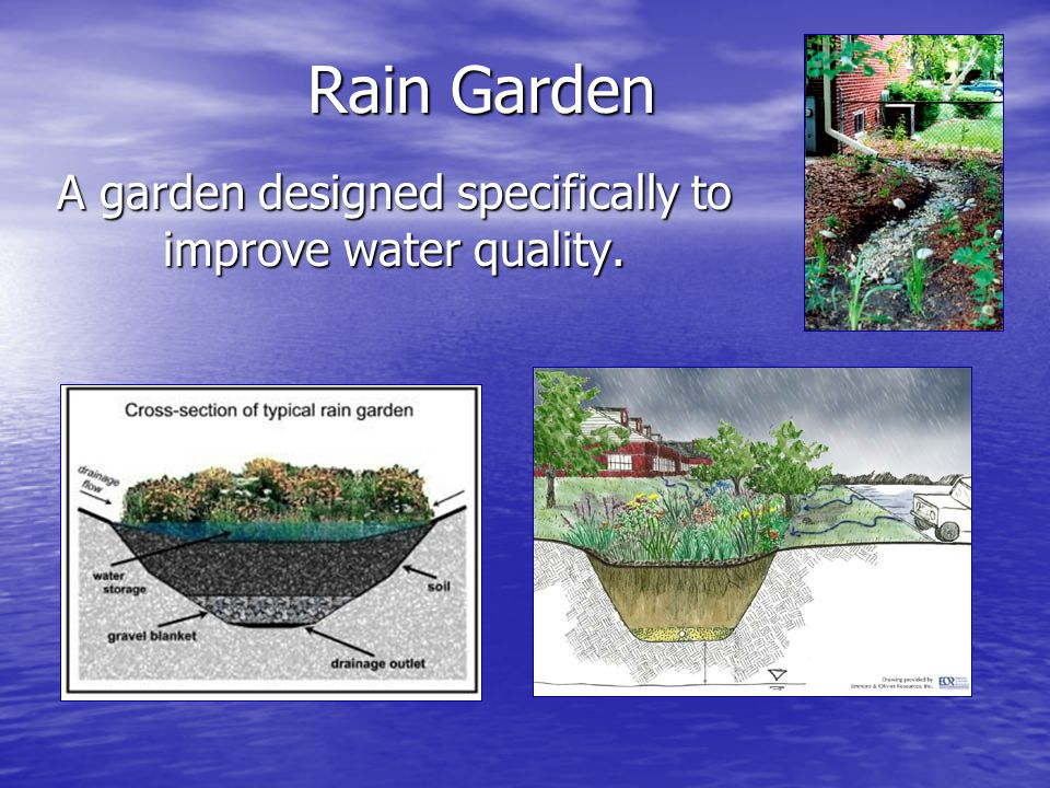 Rain Garden A garden designed specifically to improve water quality.