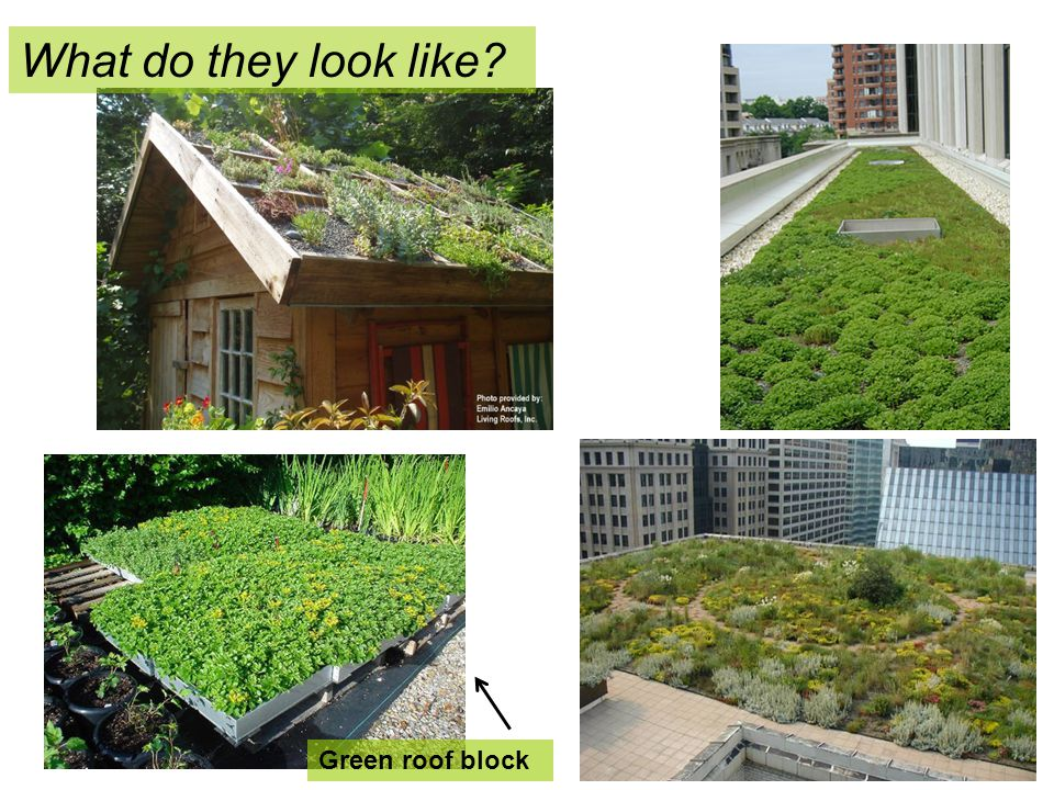 What do they look like Green roof block