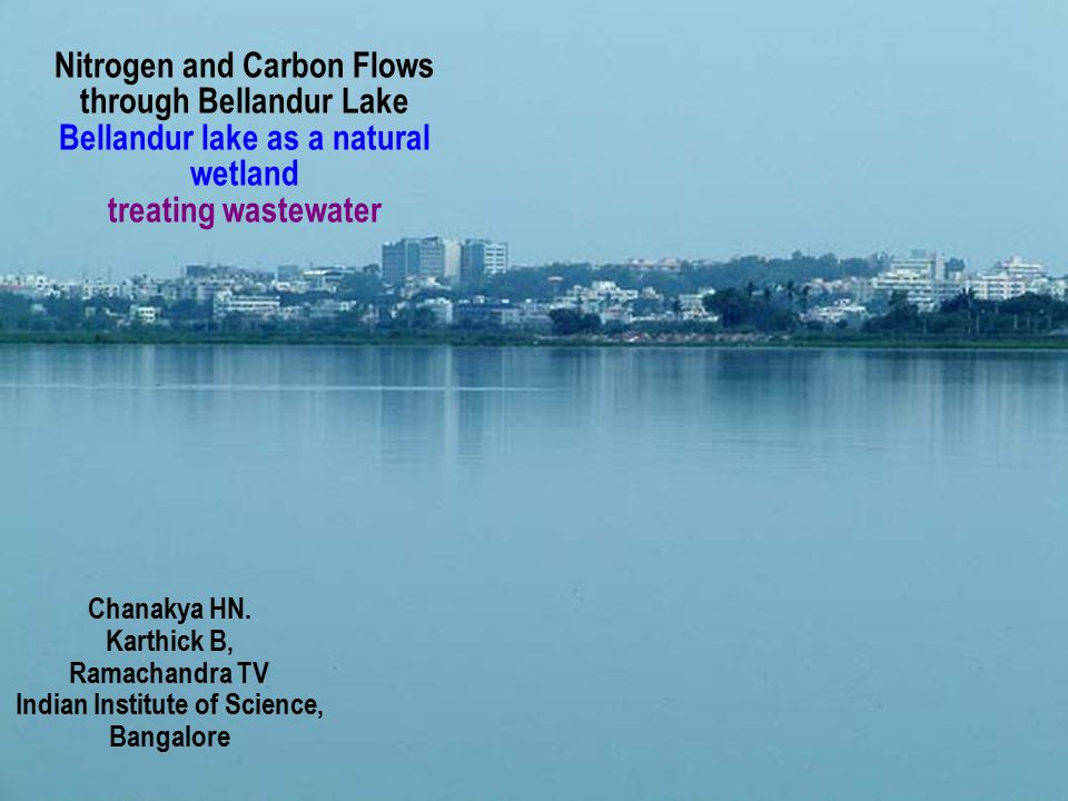 Nitrogen and Carbon Flows through Bellandur Lake Bellandur lake as a natural wetland treating wastewater Chanakya HN. Karthick B, Ramachandra TV India