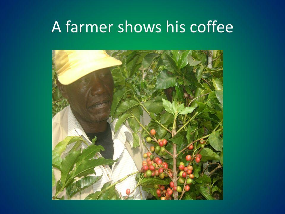 A farmer shows his coffee