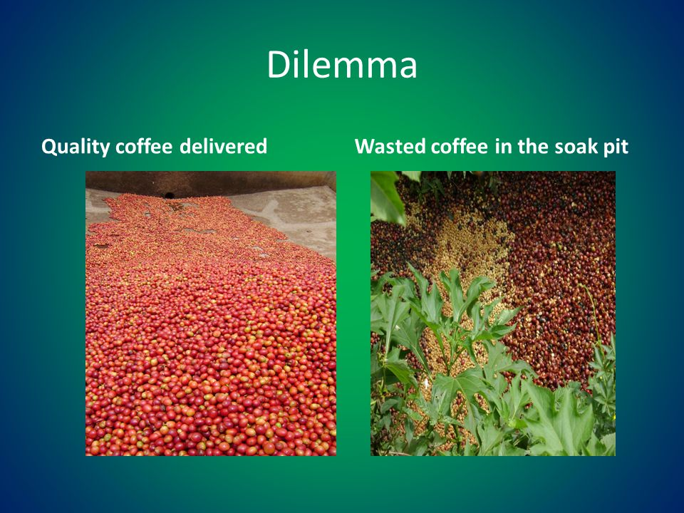 Dilemma Quality coffee deliveredWasted coffee in the soak pit