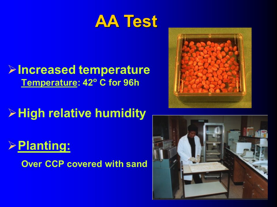  Increased temperature Temperature: 42 o C for 96h  High relative humidity  Planting: Over CCP covered with sand AA Test