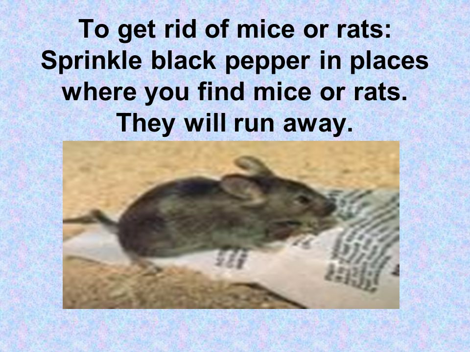 To get rid of mice or rats: Sprinkle black pepper in places where you find mice or rats.