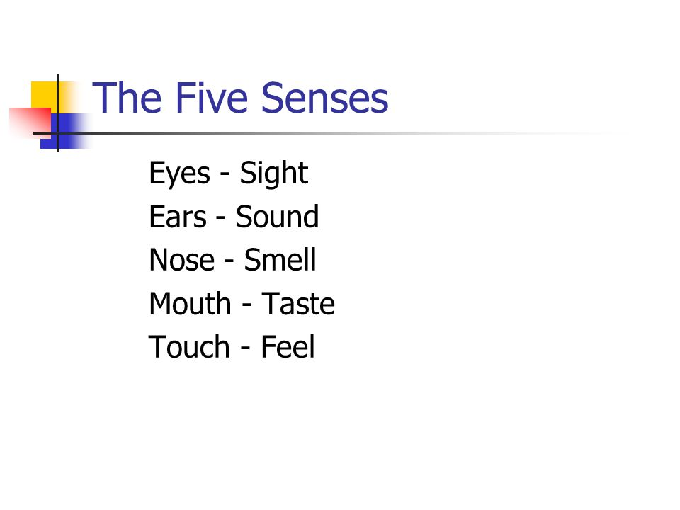 The Five Senses Eyes - Sight Ears - Sound Nose - Smell Mouth - Taste Touch - Feel