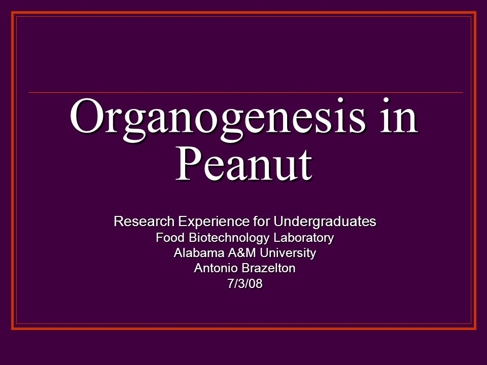 Organogenesis in Peanut Research Experience for Undergraduates Food Biotechnology Laboratory Alabama A&M University Antonio Brazelton 7/3/08