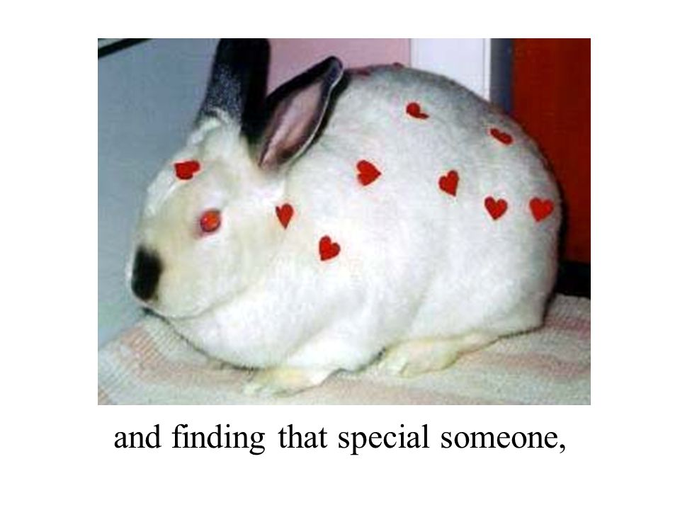 and finding that special someone,
