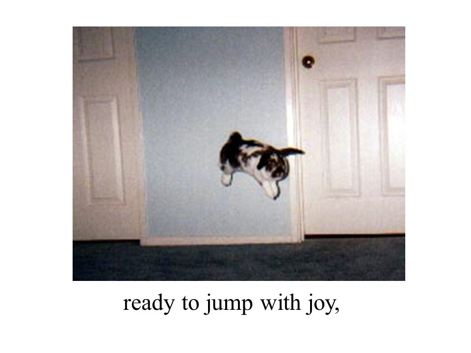 ready to jump with joy,
