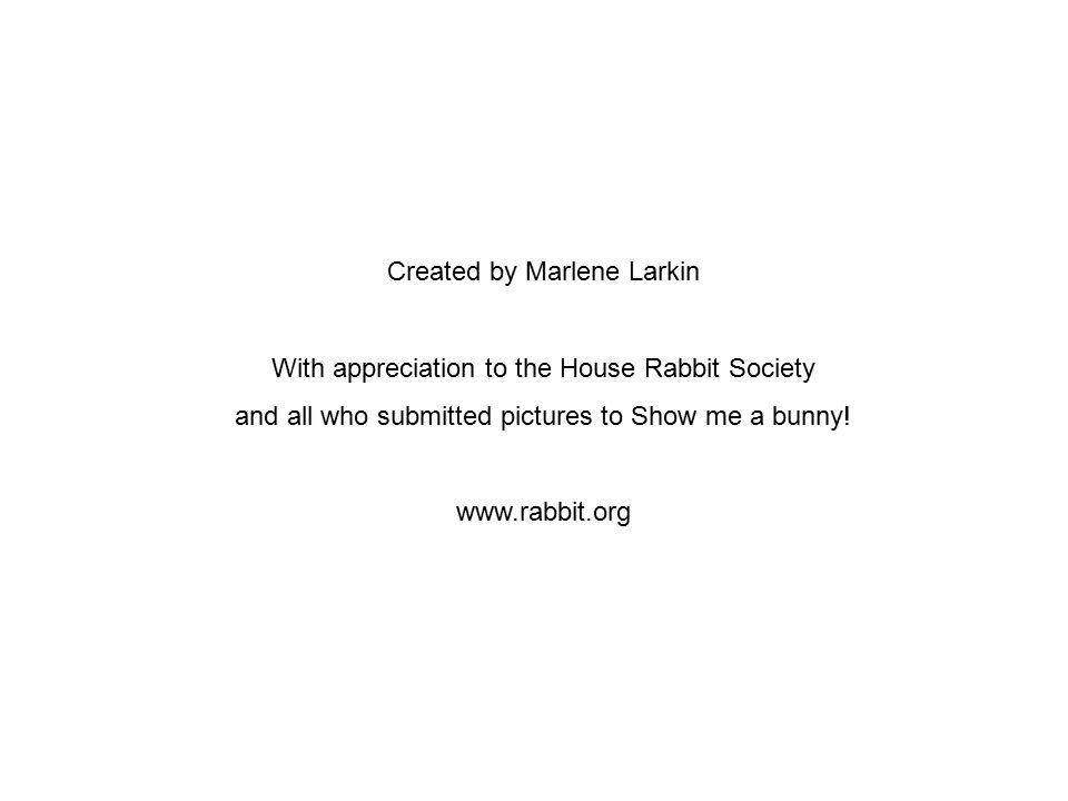 Created by Marlene Larkin With appreciation to the House Rabbit Society and all who submitted pictures to Show me a bunny! www.rabbit.org