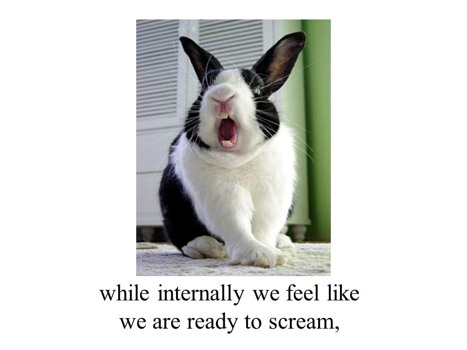 while internally we feel like we are ready to scream,