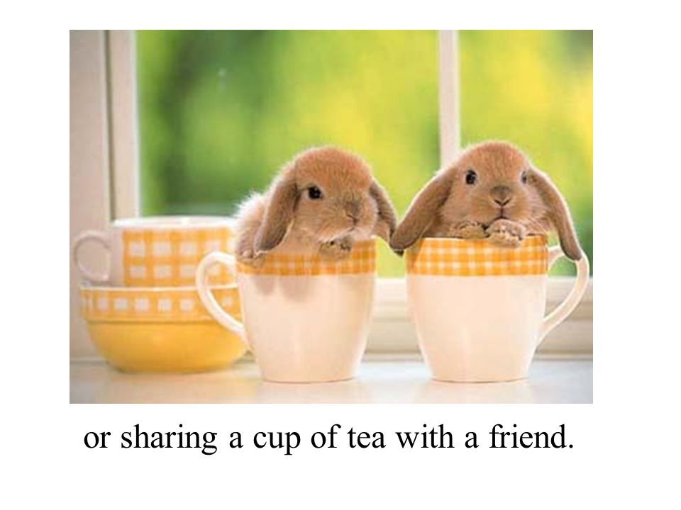 or sharing a cup of tea with a friend.