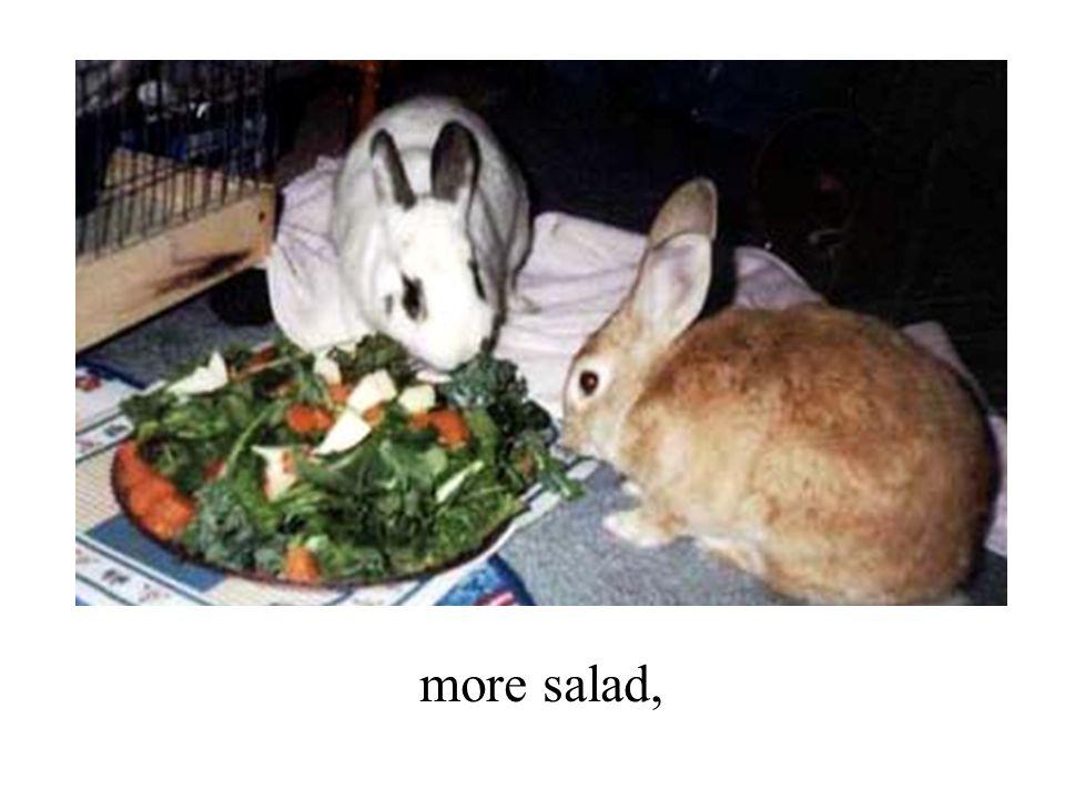 more salad,