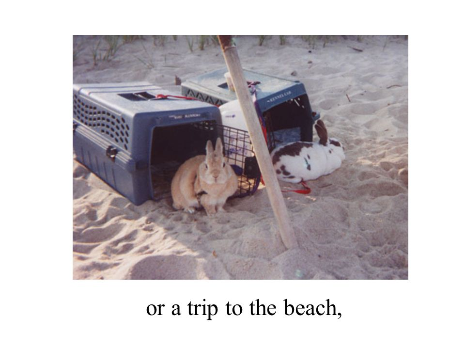 or a trip to the beach,